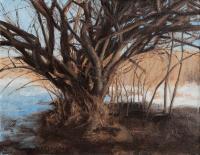 Tarini Sun Lit Tree